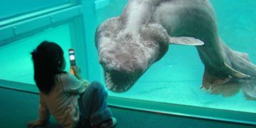 GIANT Animals You Didn't Know Existed