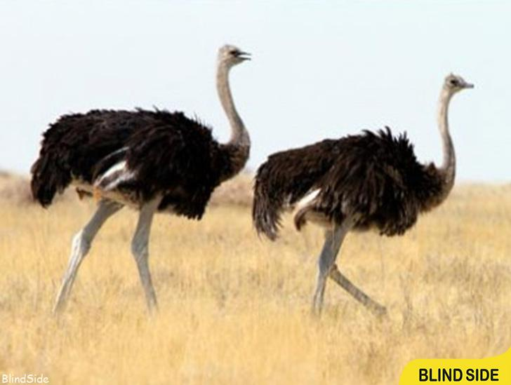 Largest Bird in the World