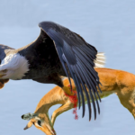 The Best of Eagle Attacks You Won't Believe Actually Happened
