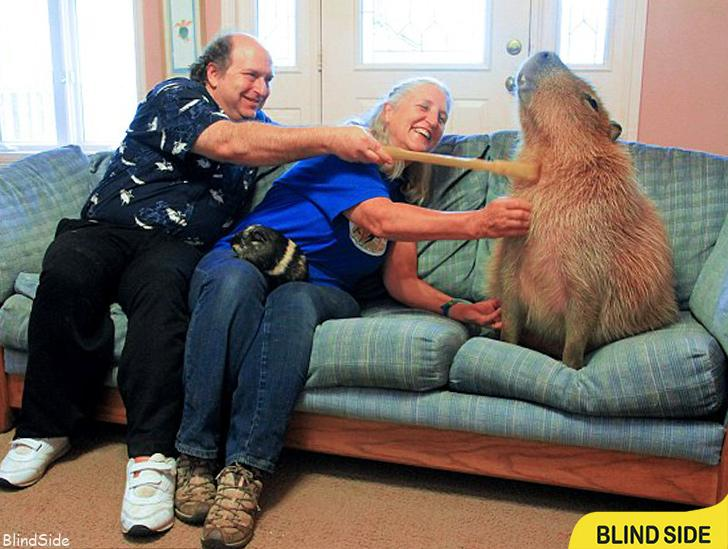 World's Largest Recorded Rodent