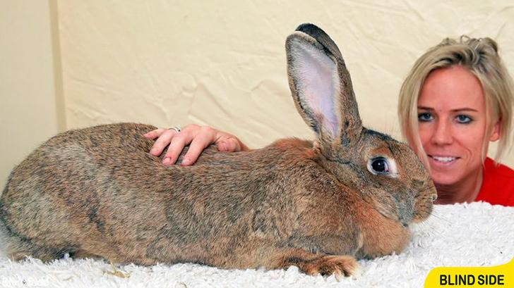 the World's Largest Rabbit